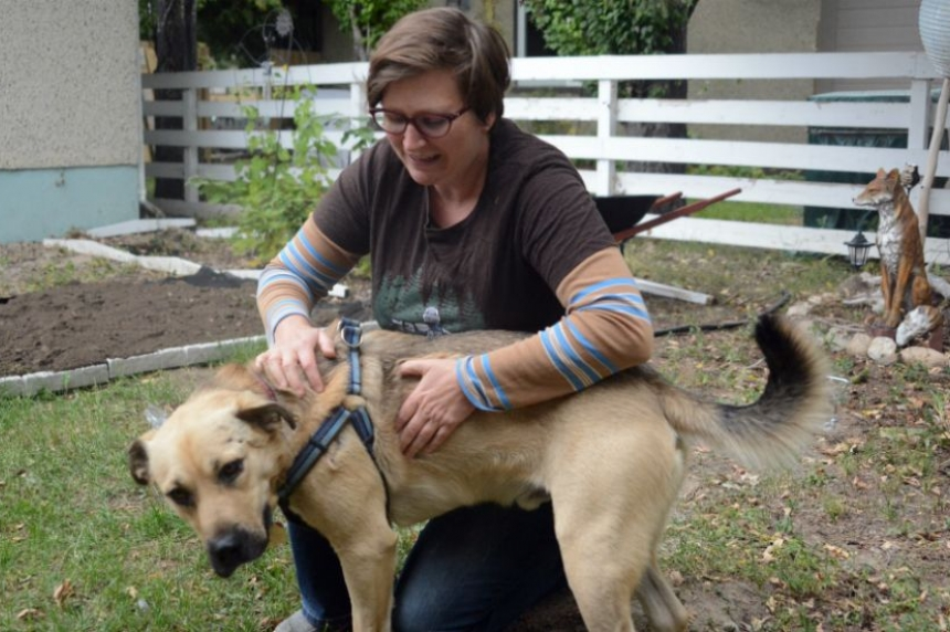 Dog finds forever home after surviving gun shots