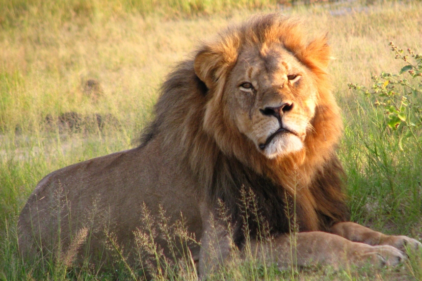 UPDATE: Wildlife federation shocked by Saskatoon Inn's decision to pull African hunting show
