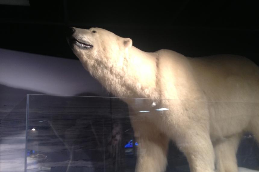 Saskatchewan Science Centre visitors go to Arctic on hottest summer days