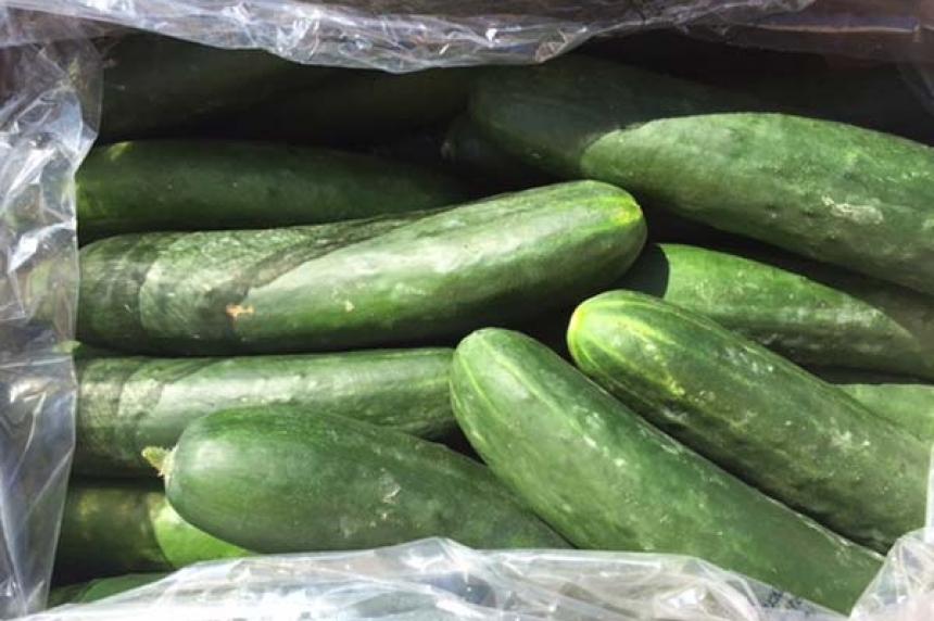 Safeway recalls cucumbers due to salmonella risk