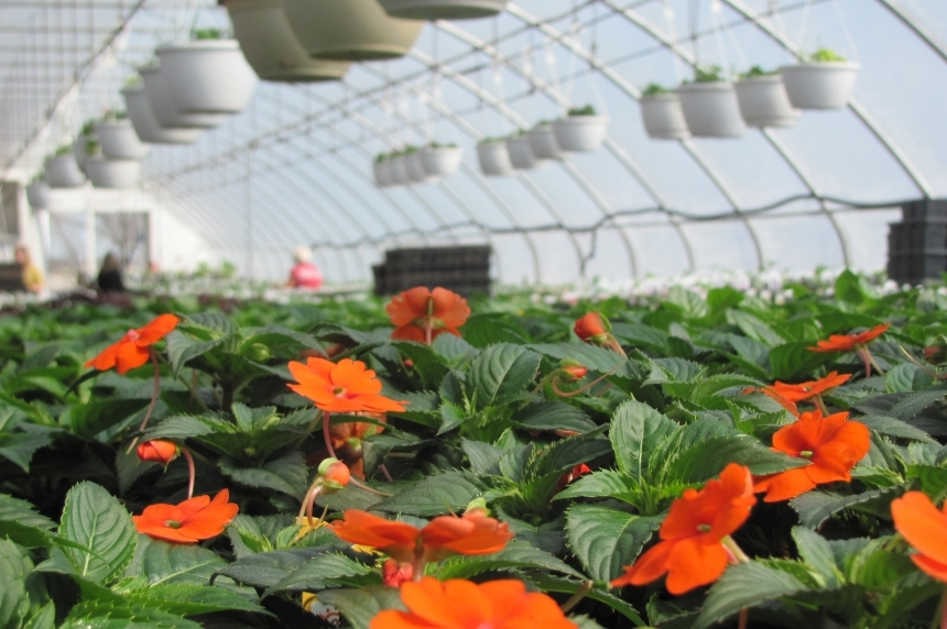 Pick or protect: Sask. gardeners get ready for fall