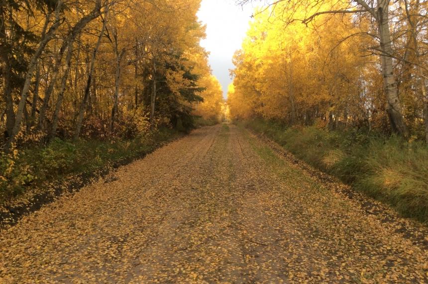 So long, summer: Leaf and yard waste depots open in Regina