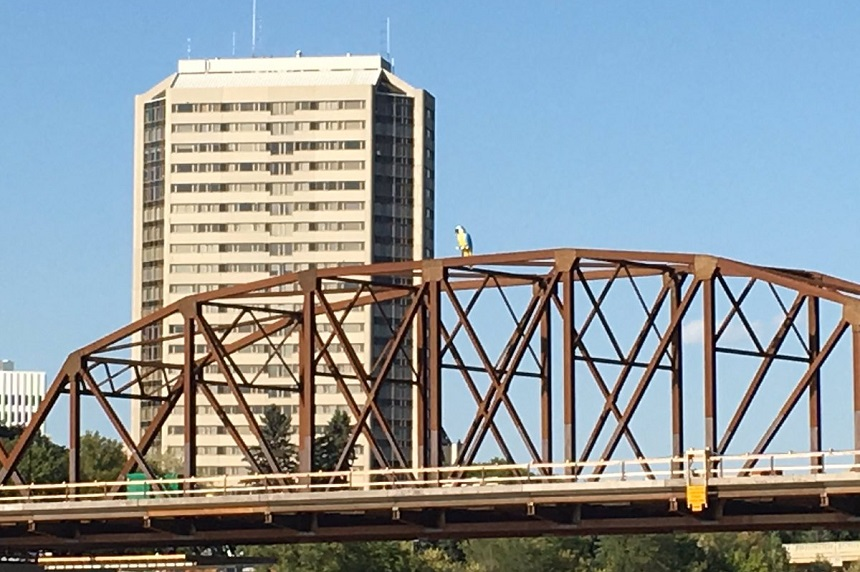 Traffic Bridge parrot mystery continues