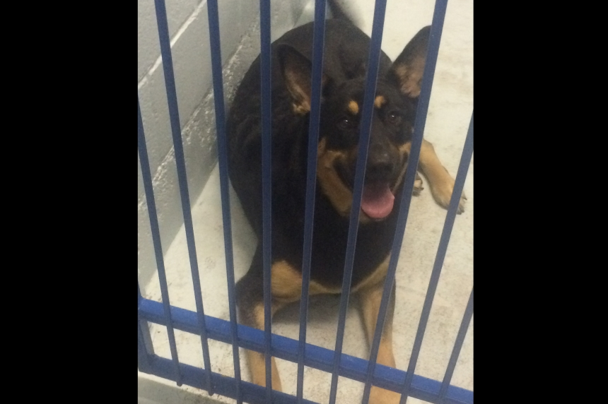 'Sweetie Bear' the dog finds new home with rescuer