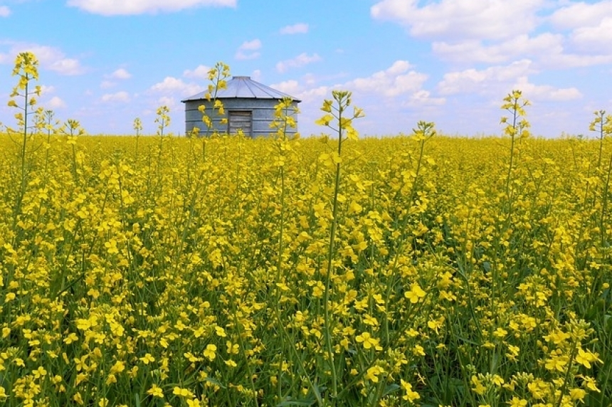 Sask. crops mostly on target despite wild week of storms