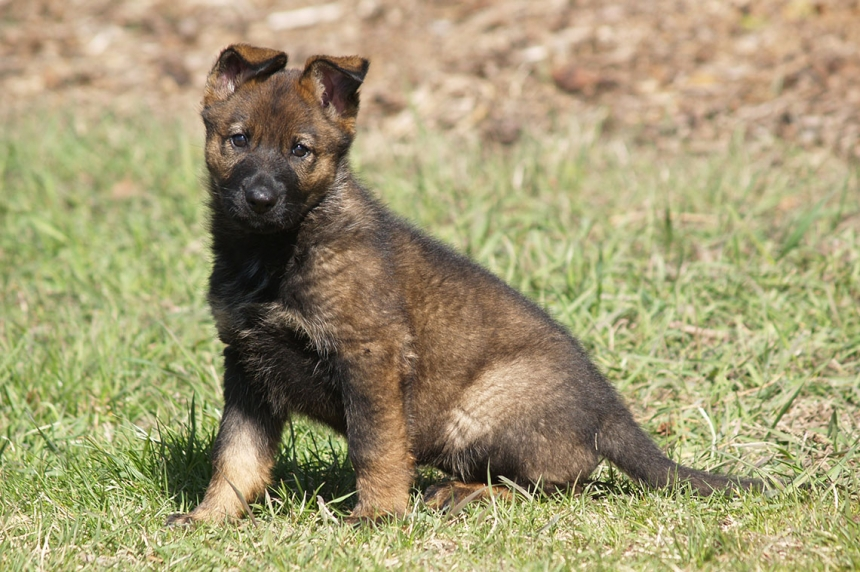 RCMP launch 2016 'Name the Puppy Contest'
