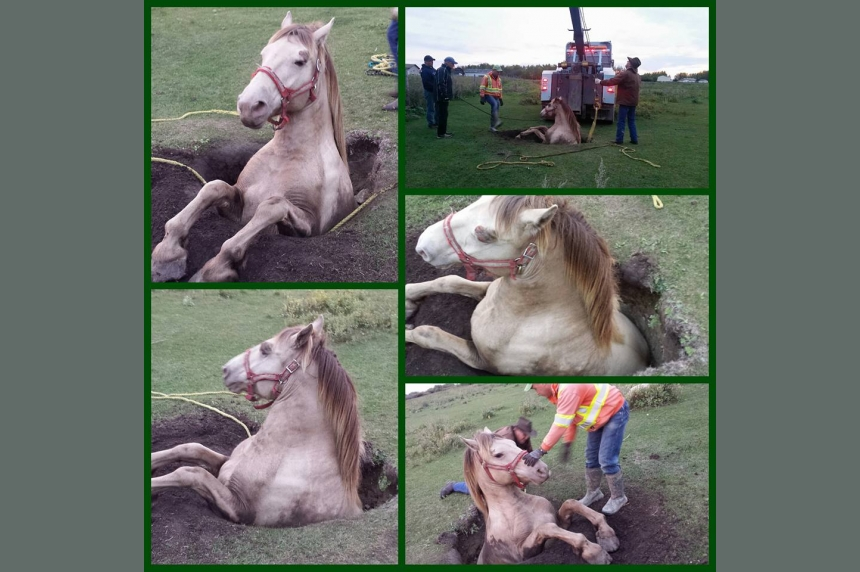Dramatic horse rescue near Martensville after animal falls in old well