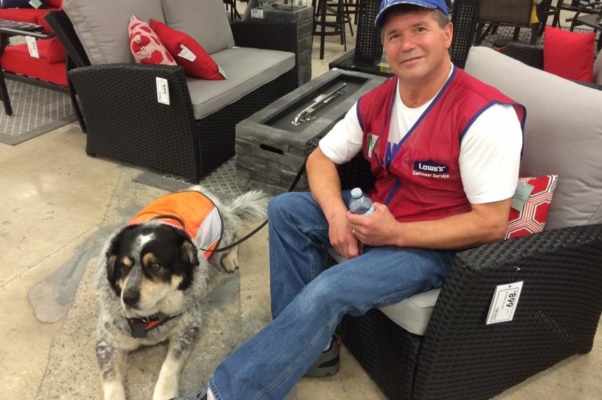 Service dog of Regina Lowe's employee put down due to illness