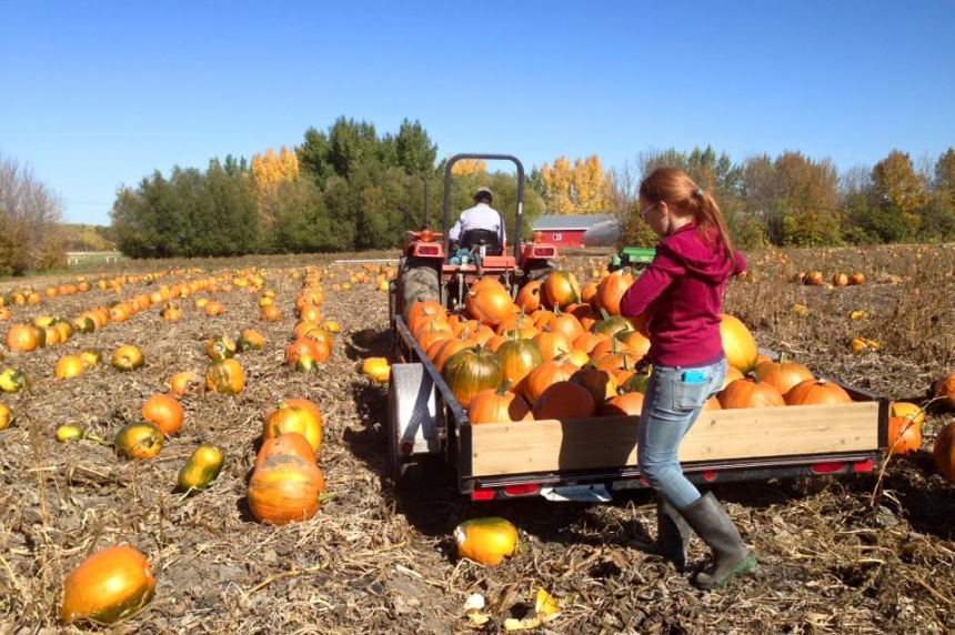 Sask. not affected by U.S. pumpkin shortage