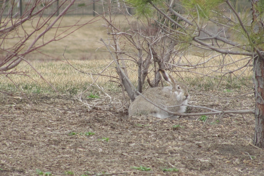 Martel On The Move: are the number of rabbits on the rise?