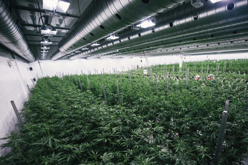 Yorkton pot plant expanding, will create more jobs