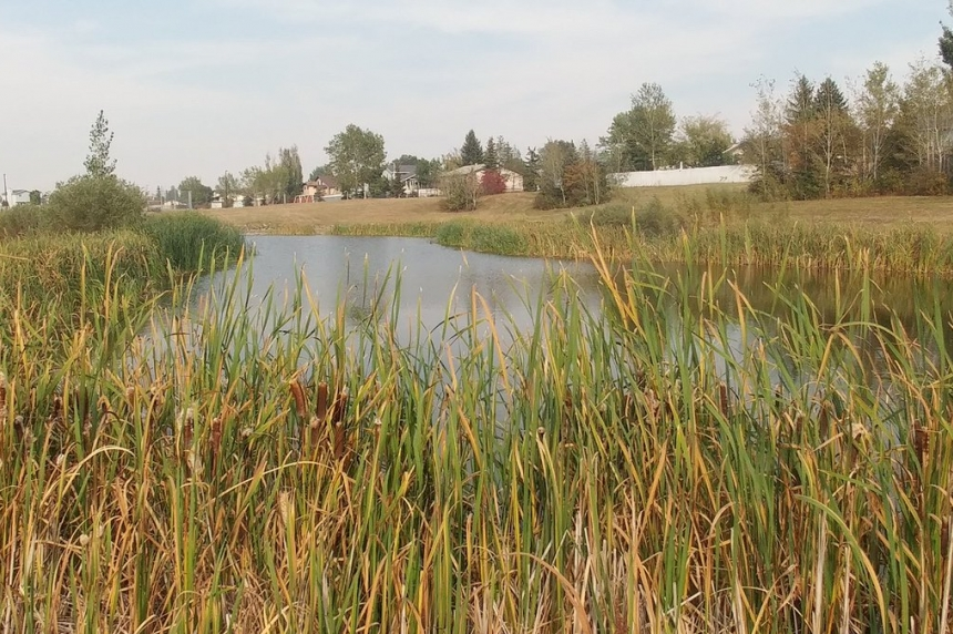 Pond safety review recommends partial fence for Dundonald park
