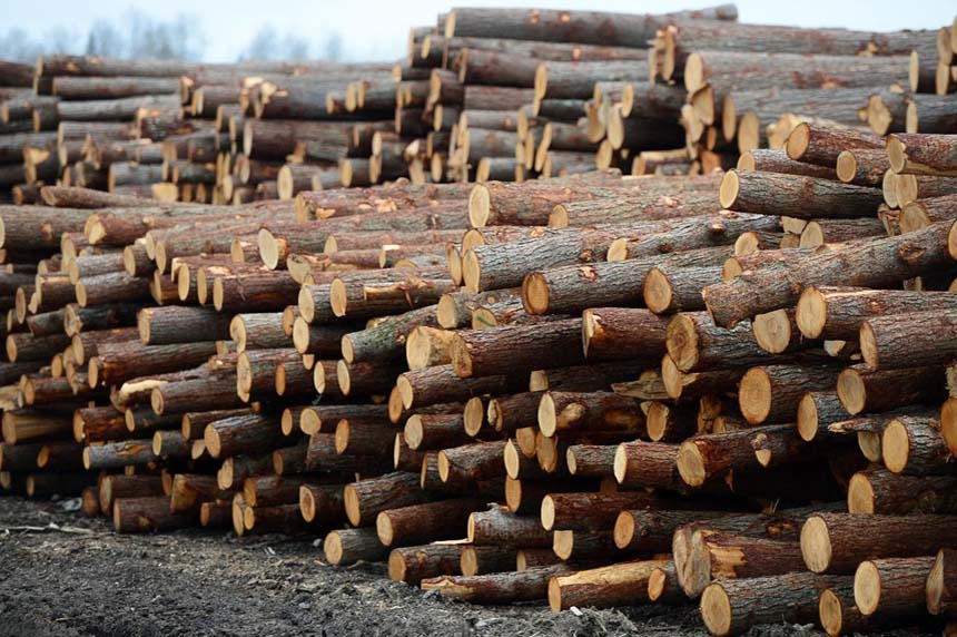 U.S. agency rules against Canada; says softwood imports harm American industry