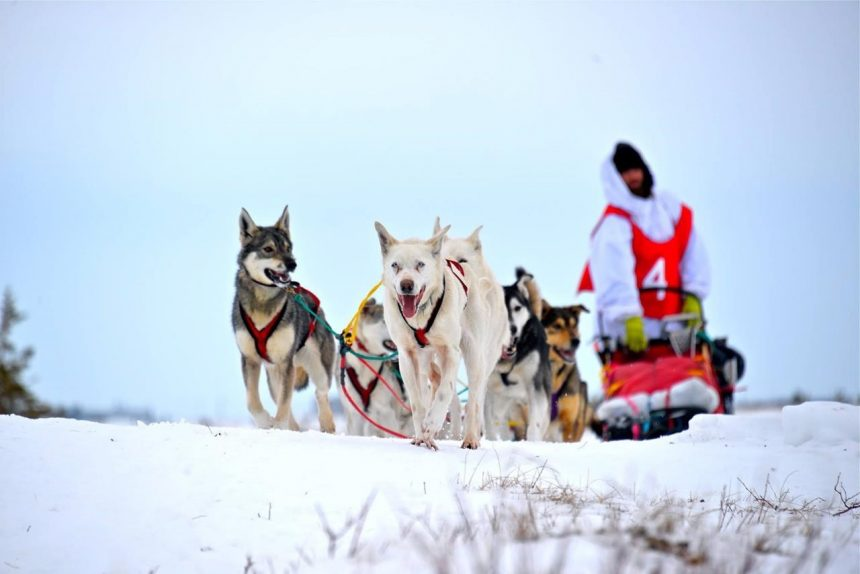 Man begins dog sled journey across Canada:'We're going to face some adversities'
