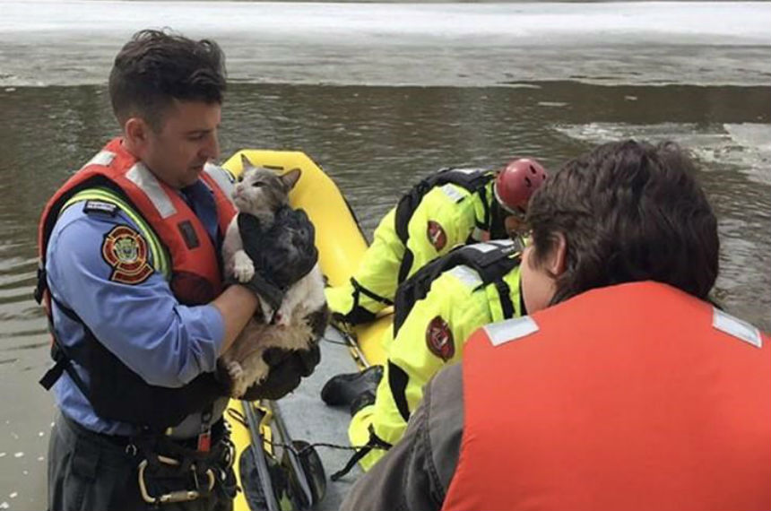 Fearful feline fetched from floe: Winnipeg firefighters save cat stranded on ice