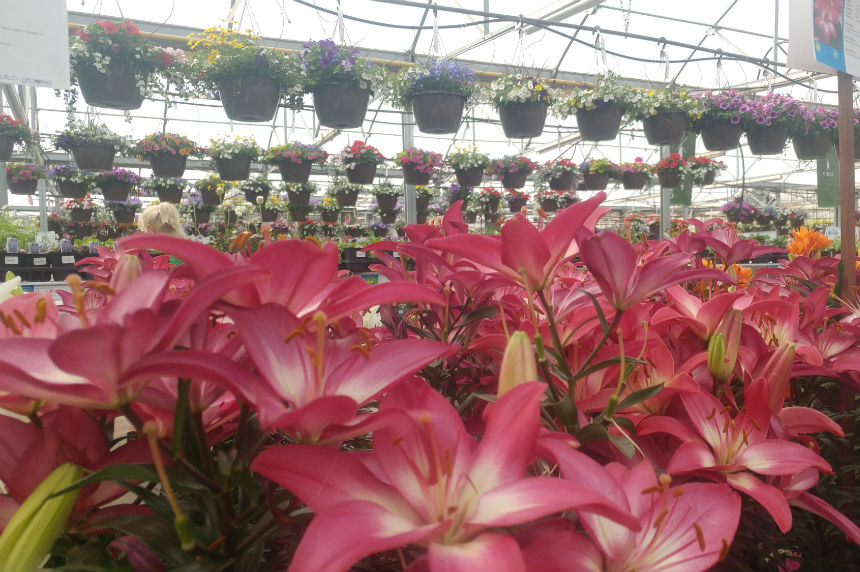 Green thumbs up for warm weather ahead of planting season