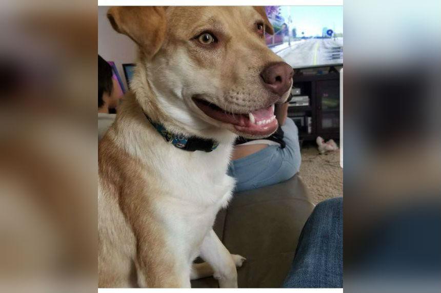 Doggie Houdini: Pup unlocks doors, escapes Saskatoon SPCA