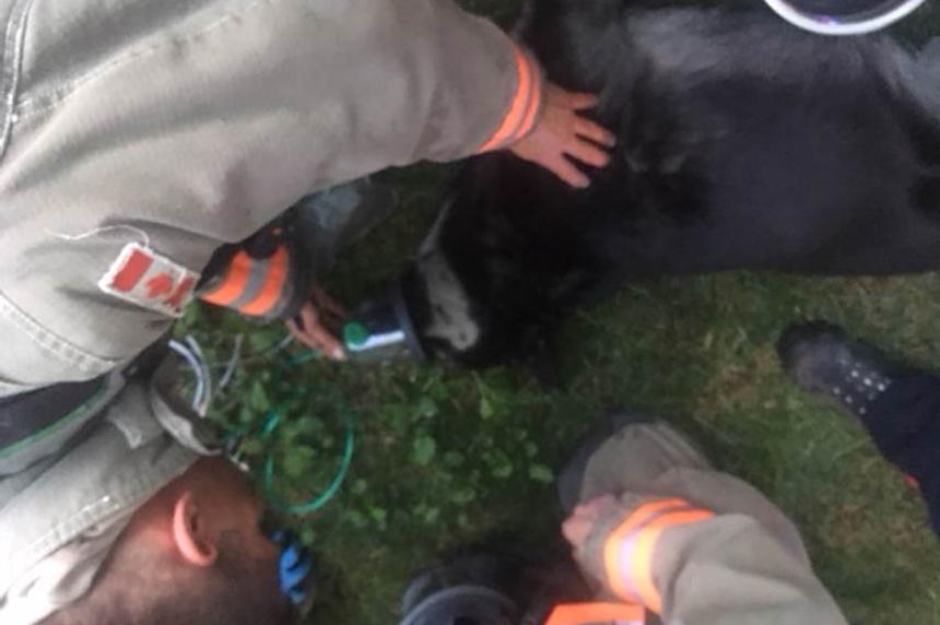 Saskatoon firefighters rescue dog from blaze