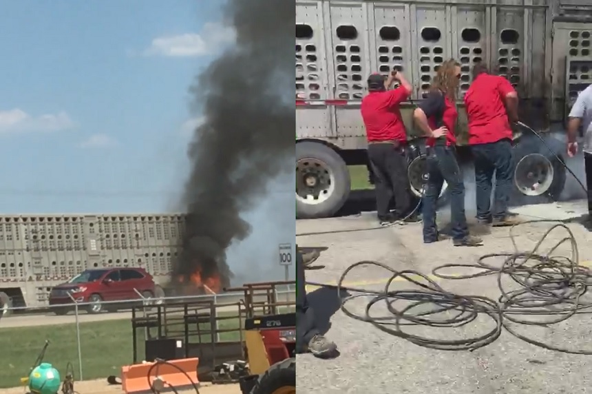Hogs saved from trailer fire by business staff near Tisdale