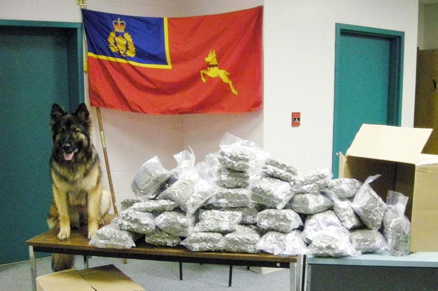 Cannabis legalization forces 14 RCMP sniffer dogs into early retirement