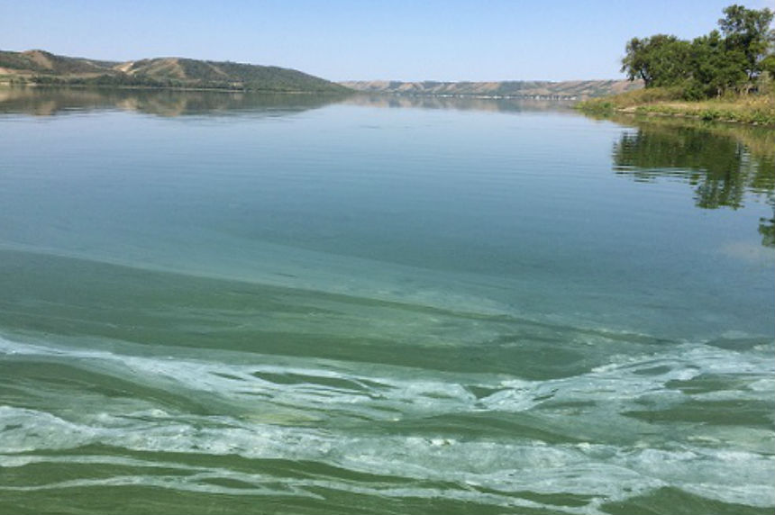 Province warns people, pets to avoid water with algae blooms