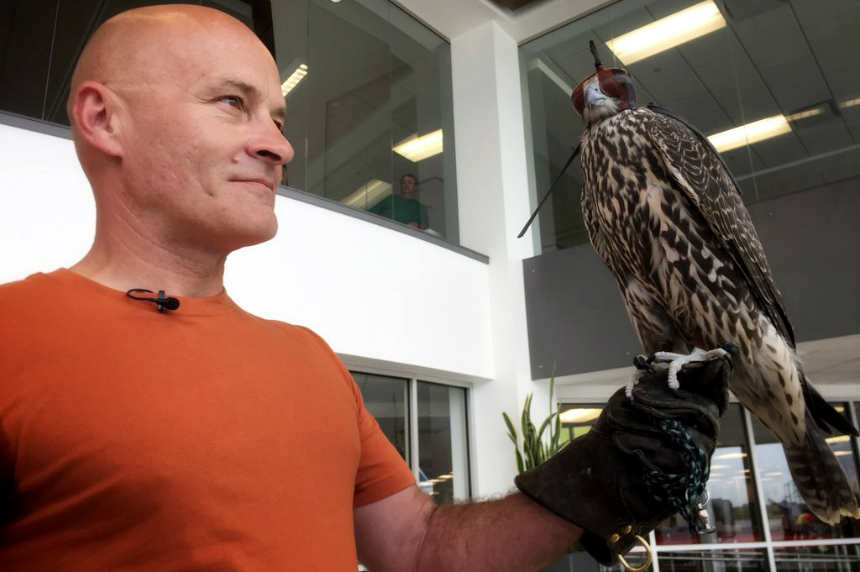 Falcons to keep unwanted birds away from Saskatoon Airport