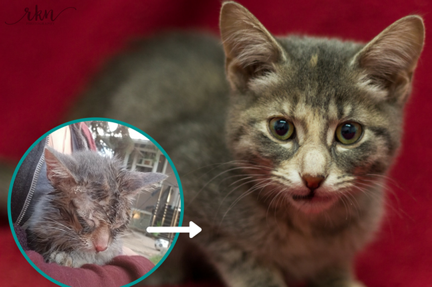 SPCA says kitten on the mend after being tortured