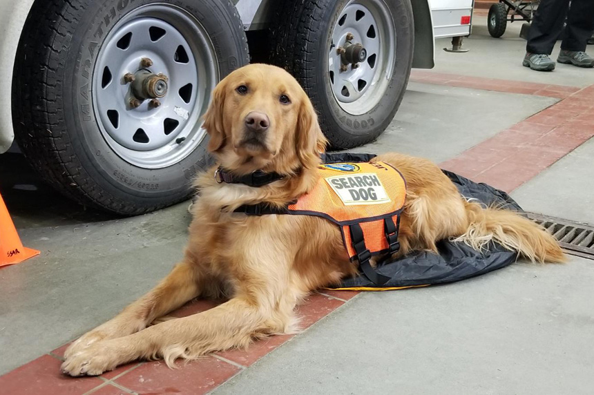 Specially trained dog joins Saskatoon Search and Rescue