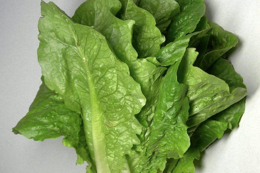 Health officials warn of romaine lettuce E.coli outbreak
