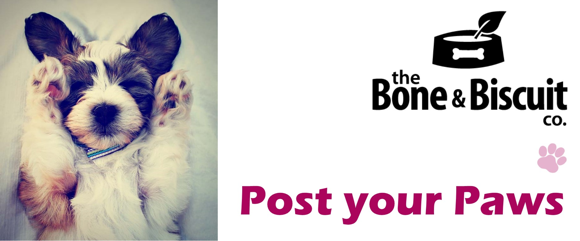 Post your Paws Fridays with the Bone & Bisquit