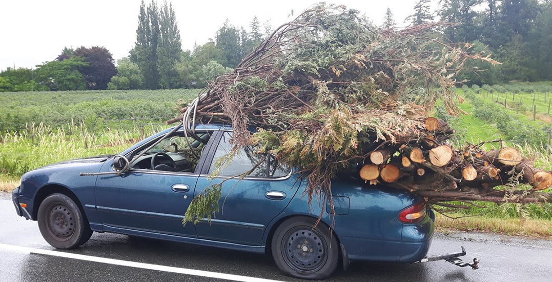 How not to haul trees in Abbotsford, please and thank you.