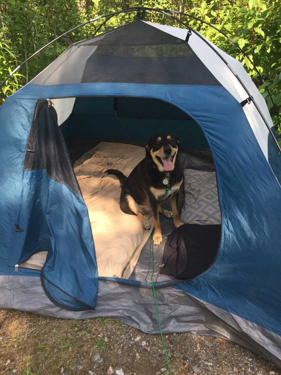Nala's First Camping Trip!