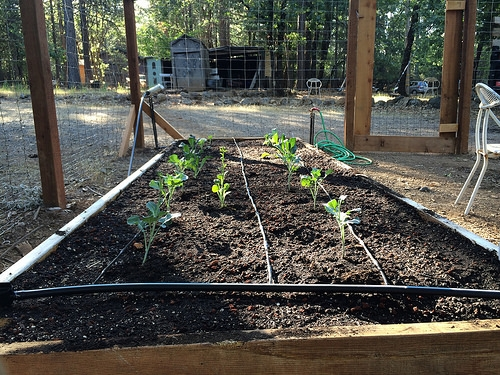The New Fertilizer For Your Garden