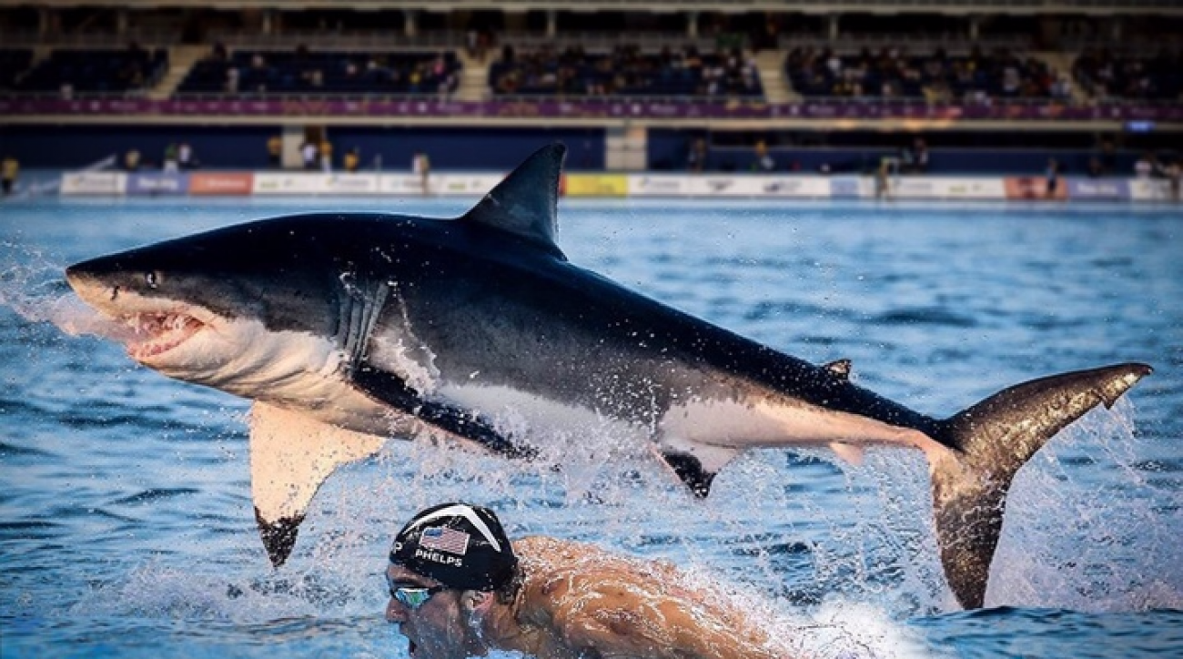 Phelps vs Shark.  And the winner IS....?