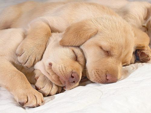 Go Ahead, Sleep in!