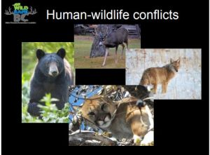 RDNO Considers Wildsafe Program