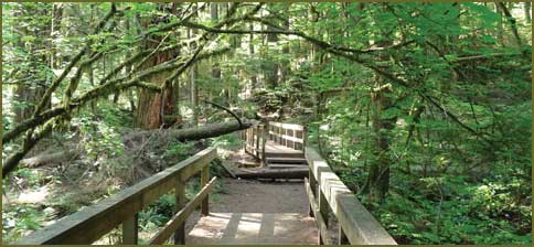 City Closes Part of Canyon Falls Park Trail