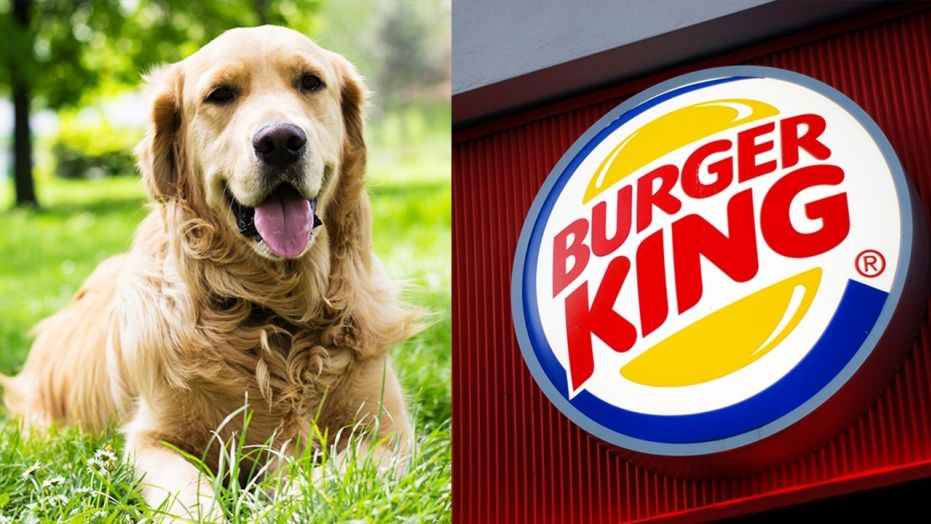 Meet Flynn, the flame-grilled burger sniffing guide dog!