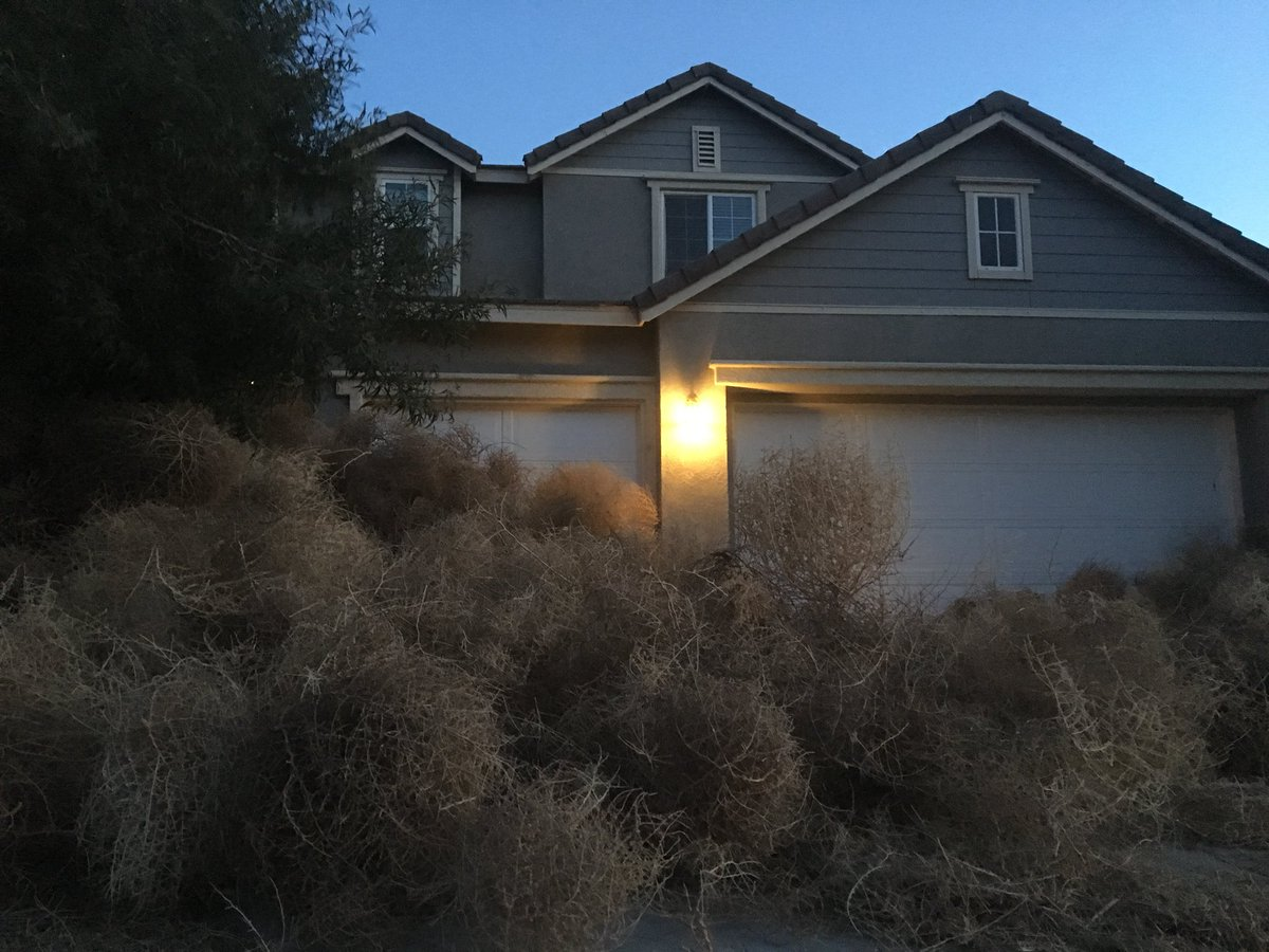 The latest natural disaster?  Tumbleweeds!