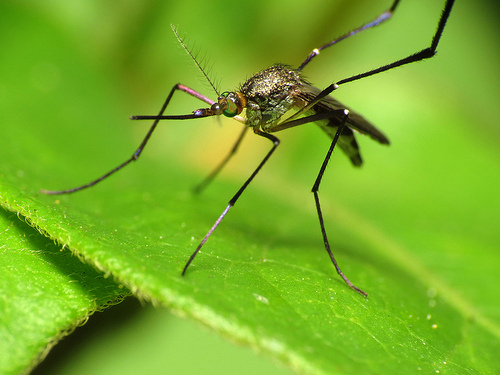 Mosquitoes Know You!!!!!!!