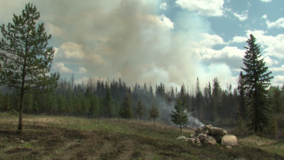 Allie Lake Fire Forces Evacuation of 14 Properties as a Precaution