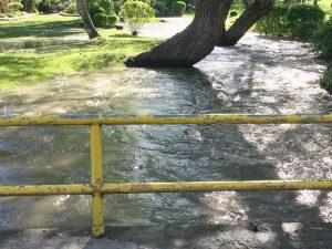Flood Alert Lifted For Coldstream Homes