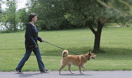 Dog Bylaw Change Panned By City