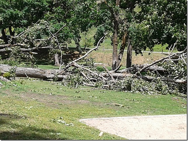 Thousands Still Without Power, Trees Blown Down