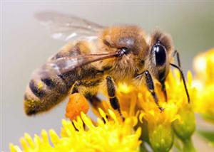 """Bylaw Could """"Bee"""" Changed"""