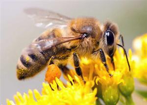 Bee Programs Get Funding