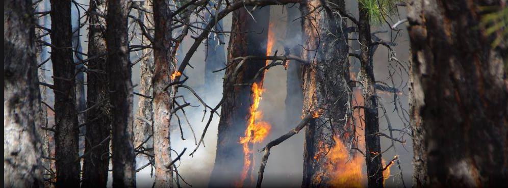 North Okanagan Wildfire Update