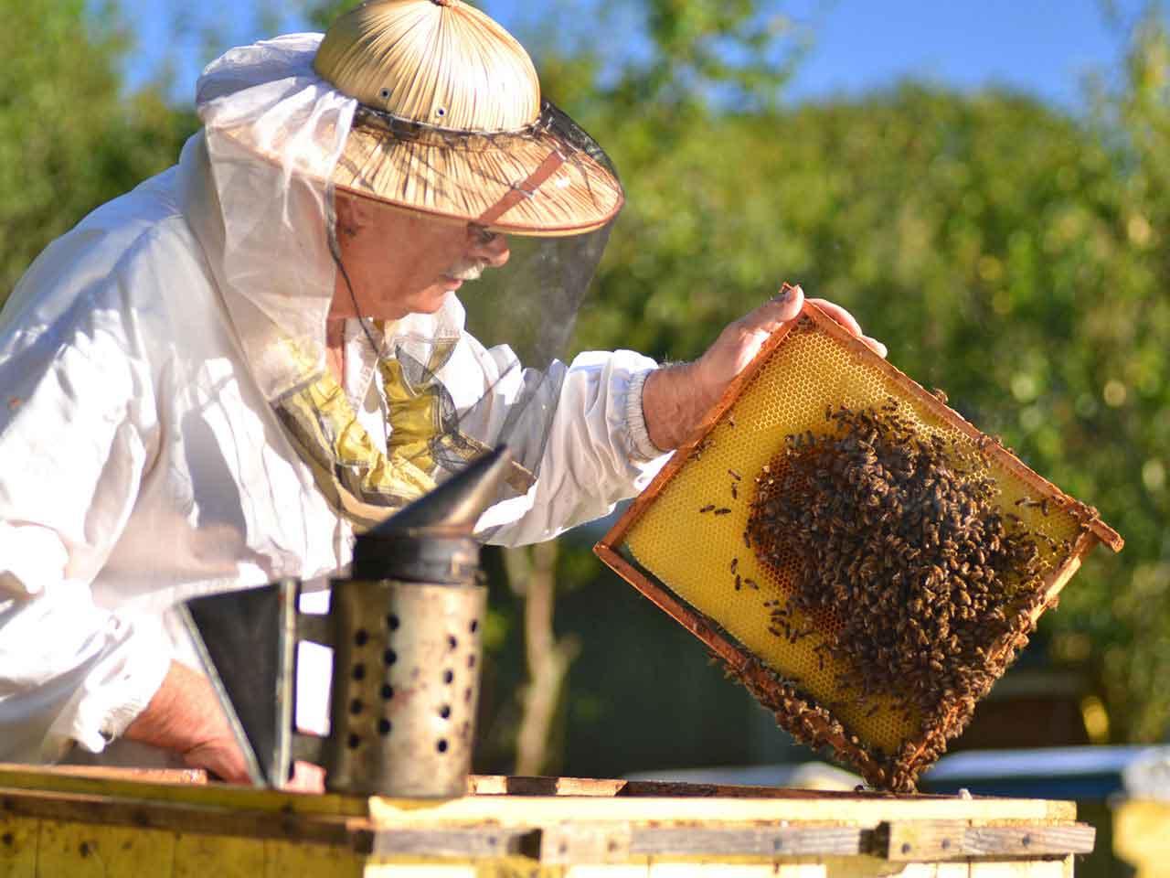 Backyard Bee Keeping