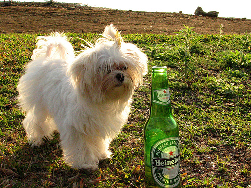 Finally, Beer For Your Dog