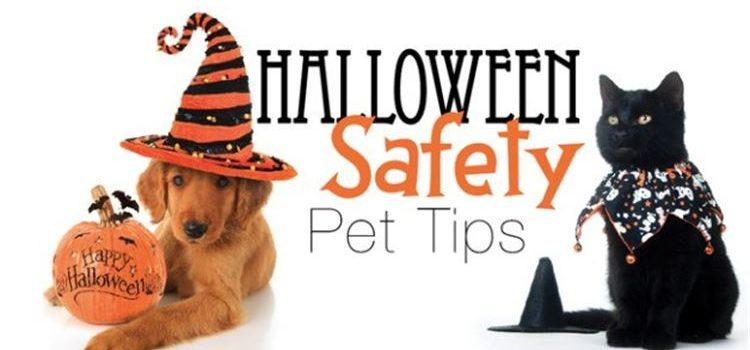 Halloween: No Treat for Pets